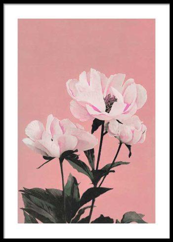 COLORIZED VINTAGE FLOWERS NO. 2 JULISTE