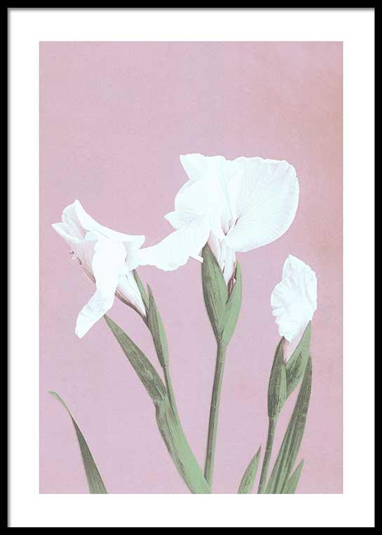 COLORIZED VINTAGE FLOWERS NO. 3 JULISTE